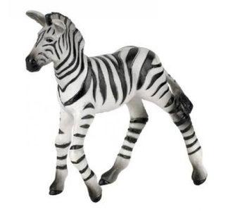 Zebra unge